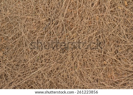 Dry pine leaves background - stock photo
