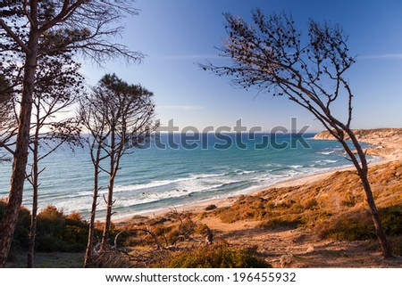 Dry pine trees on the coast of Gibraltar strait in Morocco - stock photo