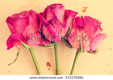 Dry pink roses on old paper background. Vintage image. - stock photo