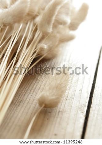 Dry plants - stock photo