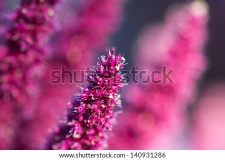 dry purple flower. macro - stock photo