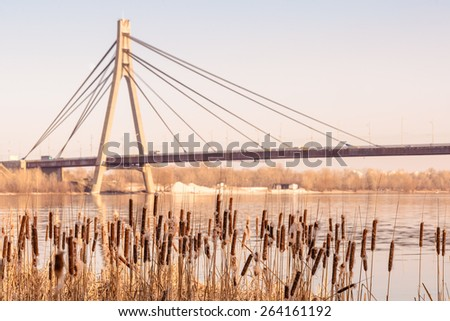 Dry Reeds with flowers close to the Dnieper river at the end of winter. Kiev's Moskovsky bridge in the background - stock photo