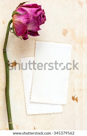 Dry rose and blank card for your text