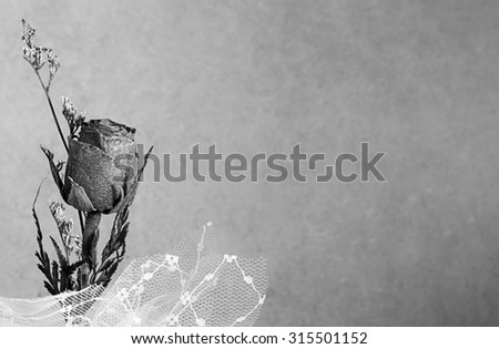 Dry rose on abstract blurry background with monochrome gray shade tone, space for text - stock photo