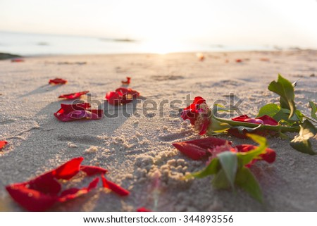 Dry rose on beach in sunrise time. Withered red rose on sand. Red flower on sand. Broken heart concept background. Sad time background. Red flower on sunrise time. Feel sad. Love concept. Red rose. - stock photo