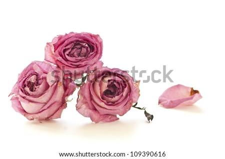 Dry roses isolated on white background - stock photo