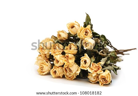 dry roses on a white background - stock photo