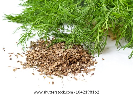 Dry seeds and fresh green dill isolated on white background