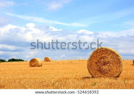 Dry straw ball on a sunny summer day