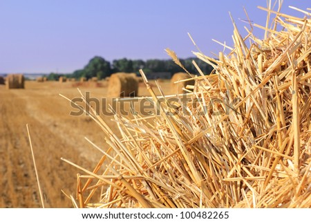 dry straw texture, blue sky and field, useful for backgrounds