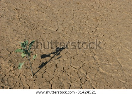 Dry terrain. Kuiseb Canyon, Namibia. - stock photo