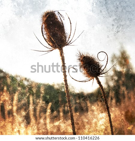 Dry thistles on meadow - stock photo