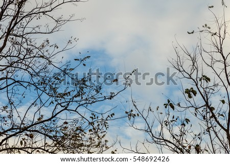 dry tree and sky background