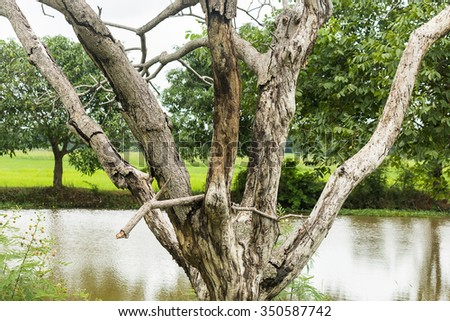 dry tree at countryside - stock photo