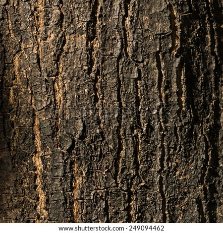 dry tree bark texture background, closeup - stock photo