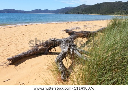 Dry tree branch laying on the sandy beach of Abel Tasman National Park, South Island, New Zealand. - stock photo