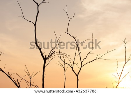 Dry tree branches with yellow sky - stock photo