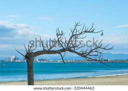Dry tree in roses gulf in costa brava - stock photo