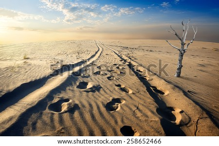 Dry tree in the sand desert at sunset - stock photo