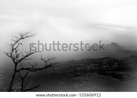 Dry tree in the winter on the mountain