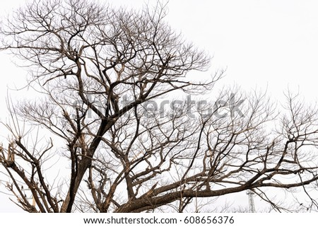 Dry tree isolated on the white background