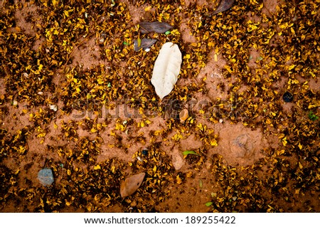 Dry Tree leaves and Flower on a Ground for background,wallpaper and texture.