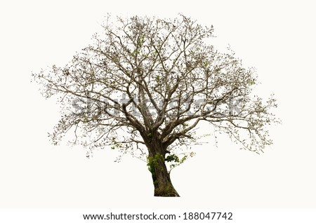 Dry tree on a white background - stock photo