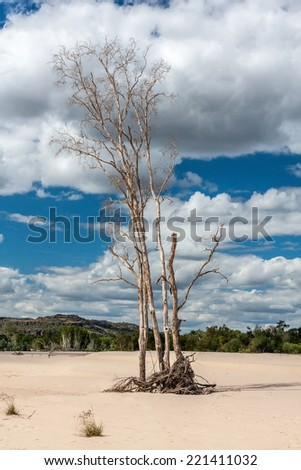 Dry tree on sand on background of blue sky. Dry tree on sand on background of blue sky with clouds and mountains in the distance. Australia. - stock photo