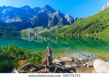 Dry tree on shore of alpine lake Morskie Oko, High Tatra Mountains, Poland - stock photo