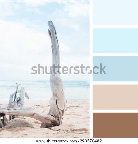 dry tree on the beach.  color palette swatches. pastel  hues - stock photo