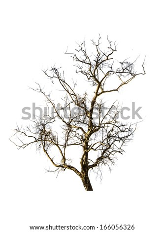Dry tree on the white background. - stock photo