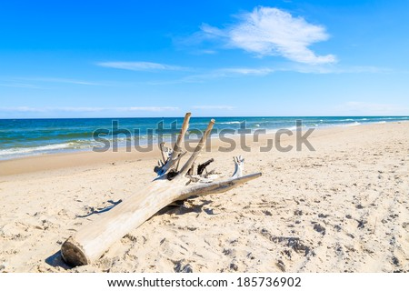 Dry tree trunk sea beach wave coast summer blue sunny sky, Leba, Baltic Sea, Poland