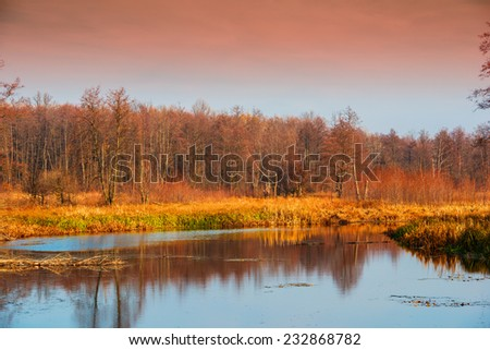 dry trees and swamp on a background autumn forest