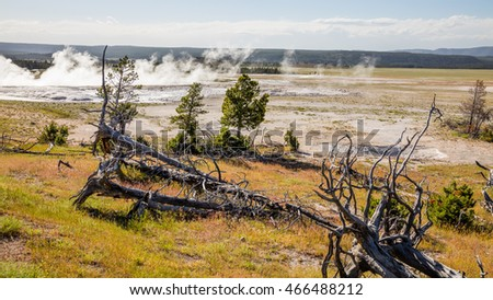 Dry trees with roots after a fire. Geysers landscape. Fountain Paint Pots. Yellowstone National Park, Wyoming