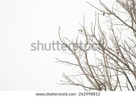 Dry twigs background - stock photo