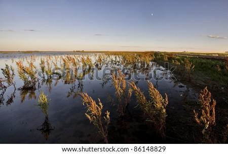 Dry Weeds and Marshland Saskatchewan Canada Sunset - stock photo