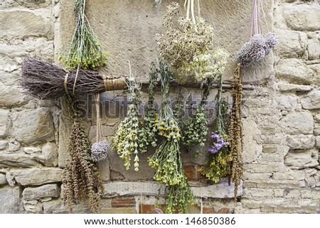 Drying herbs - stock photo