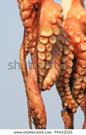 Drying octopus on sun in Greece. - stock photo