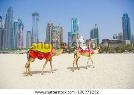 Dubai Camel on the town scape background, United Arab Emirates - stock photo