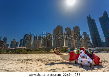 DUBAI, UAE - OCTOBER 11: Bedouin with camels on the beach at Jumeirah Beach Residence in Dubai. October 11, 2014 in Dubai, United Arab Emirates - stock photo