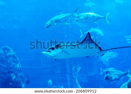 DUBAI, UAE - SEPTEMBER 30, 2012: A wide variety of fishes in a huge aquarium in Hotel Atlantis. 5 stars Hotel Atlantis (1,539 spacious rooms including 166 suites) on man-made island of Palm Jumeirah.