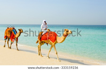 Dubai, United Arab Emirates - November 15 2006: Camels on the  beach of the Oasis resort in the new Marina quarter