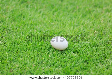 duck egg on green lawn - stock photo