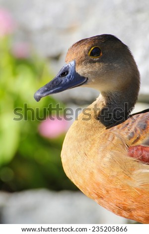 Duck face - stock photo