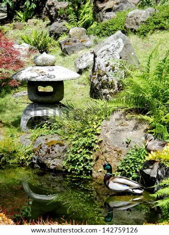 Duck in the Japanese Tea Garden - stock photo
