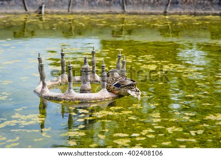 Duck in the Pond of Audley End House in Essex in England. It is a medieval county house. Now it is under protection of the English Heritage. - stock photo