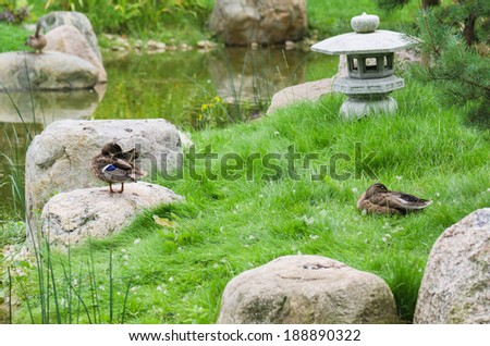 Duck Meditating Stock Photos, Images, & Pictures | Shutterstock
