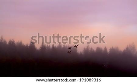 Ducks Flying During Morning Sunrise Along a Lake - stock photo