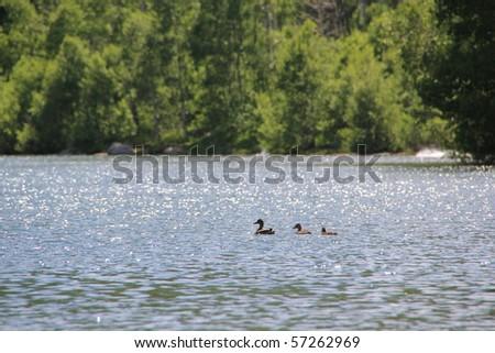 Ducks on a mountain lake - stock photo