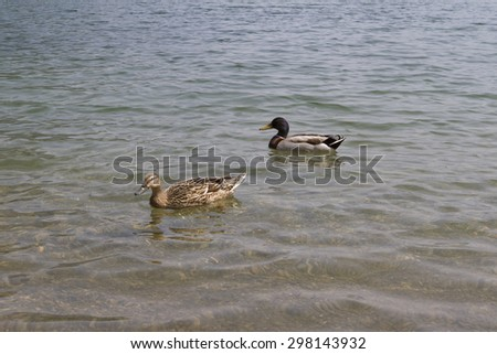 ducks on lake